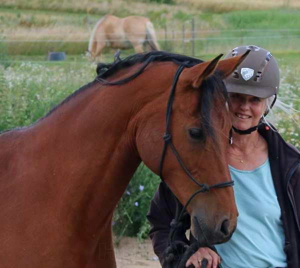 Min araberhest Cerital, som har været stor inspiration til mine hestemalerier
