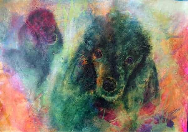 hundeportræt af puddelhunden Kicki malet i olie på lærred