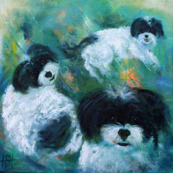 Dyreportræt af hunden Vilma med tre forskellige udtryk. Hunden er sort og hvid