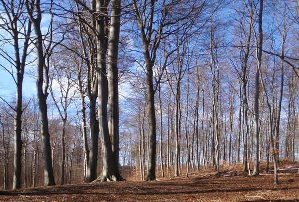 Foto på lærred til væggen - skoven om vinteren