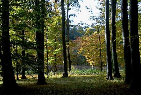 Foto til væggen - skoven i modlys