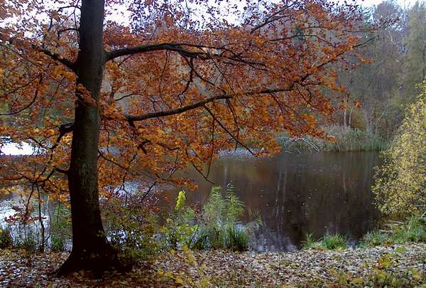 foto på væggen. efterårstræ ved en sø