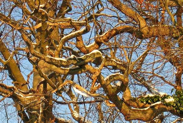 Foto af grene mod himlen. Printet på lærred klar til at hænge på væggen