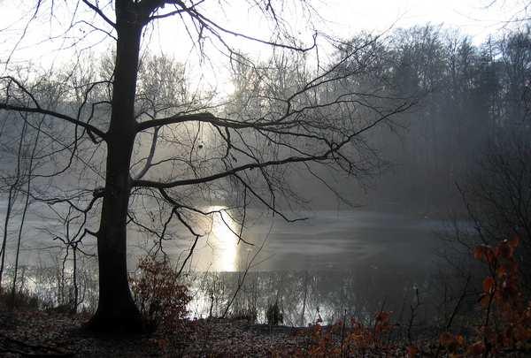 foto af træ ved en sø. Printet på lærred og klar til at hænge på væggen