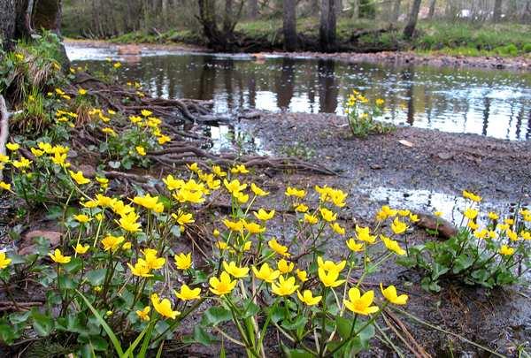 foto på lærred af gule blomster ved å