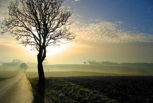 foto til væggen af træ i modlys